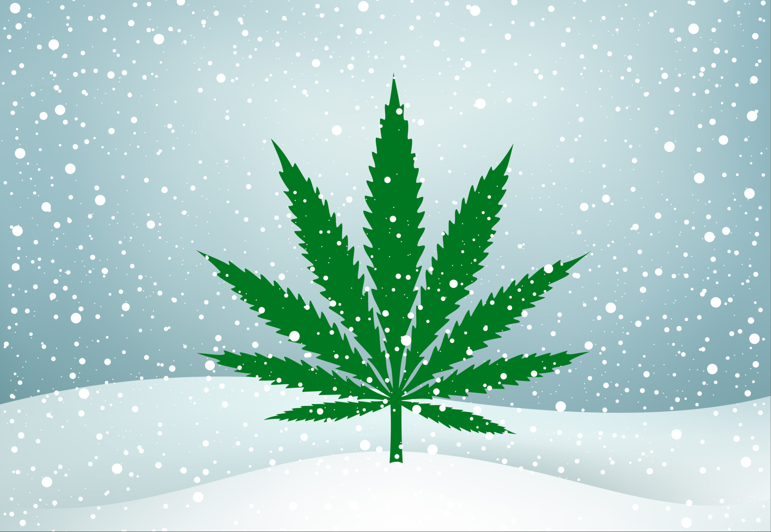 Cozy cannabis picks: Products to try while snuggling up this snowy weekend